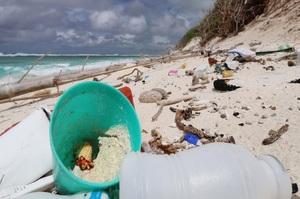 Краби-самітники опинилися під загрозою зникнення через пластикове забруднення океанів