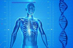 Трансплантаты напечатанных в 3D костей уже скоро станут реальностью