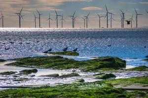 Нідерланди починають будівництво найбільшого в країні вітропарку