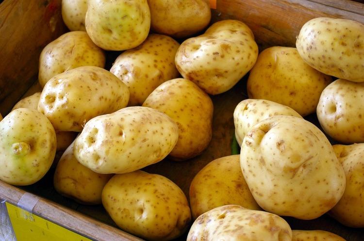 Агресивний імпорт наближає колапс українського промислового виробництва картоплі – УАВК