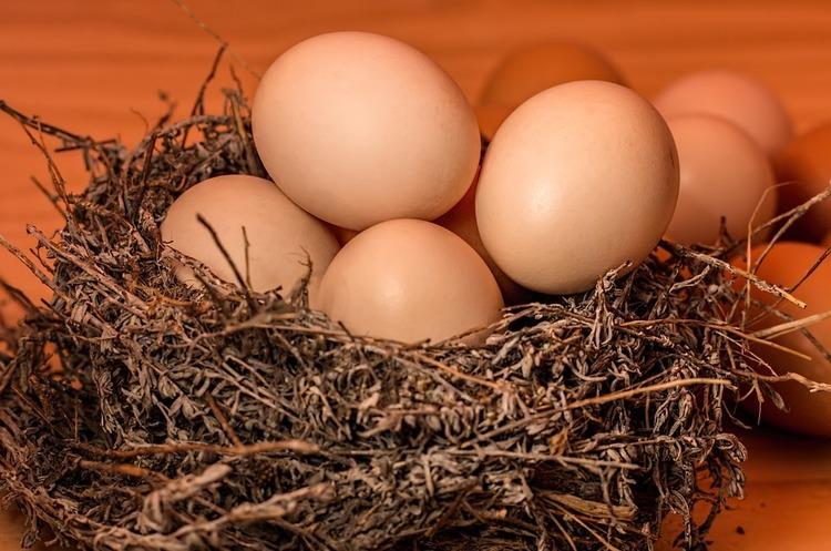 Ovostar Union почав продаж яєць стандарту «Вільний Вигул»