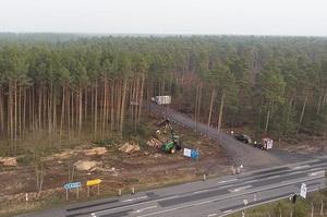 Tesla зібралася вирубати 92 га лісу під Берліном, активісти через суд призупинили роботи