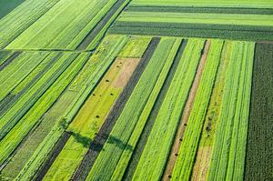 Аграрний фонд знижує ставки з фінансування аграріїв