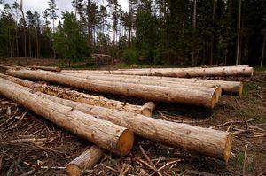 Держлісагентство заборонить продаж деревини без електронного обліку з квітня