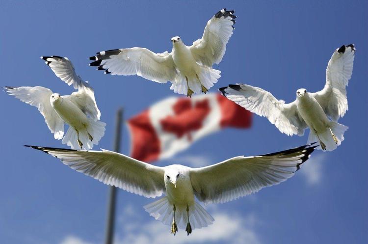 Пандемія у світі: як переживає коронавірус Канада