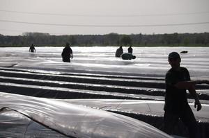 В ФРН розглядають можливість замінити сезонних робочих біженцями