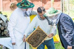 Гроші на пасіку: що не так із держпідтримкою бджолярів