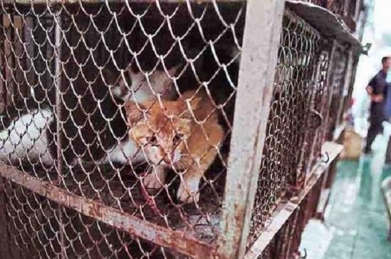 Шеньчжень стало першим китайським містом, яке заборонило їсти котів та собак