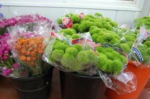 Через коронавірус в США фермери з Коста-Ріки знищують вирощені на експорт квіти