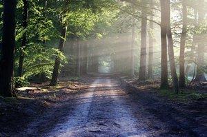 Польща закрила всі ліси й національні парки від людей