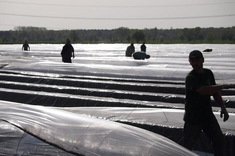 ФРН відкриває в'їзд для обмеженої кількості сезонних робітників попри карантин