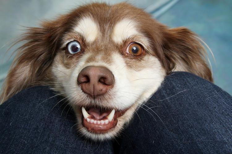 Китай може відмовитися від поїдання собак – Мінсільгосп КНР