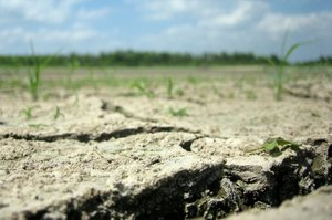 Одеська ОДА просить банки про відстрочку погашення кредитів для постраждалих від посухи фермерів