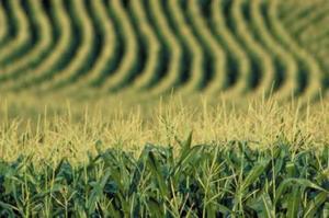 Через засуху втрати врожаю сільгоспкультур в Україні зафіксовані на 357,8 тис. га