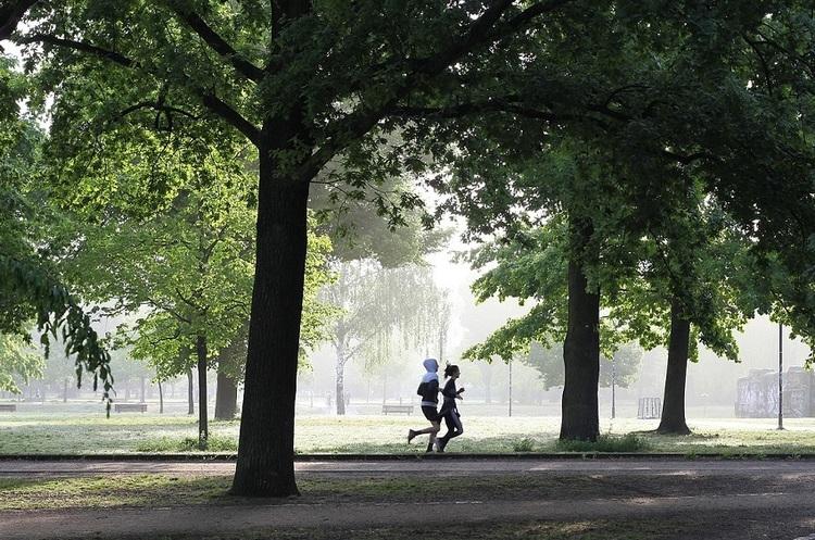 Чим різноманітніші дерева в міських парках, тим вищий імунітет у міських жителів – дослідження