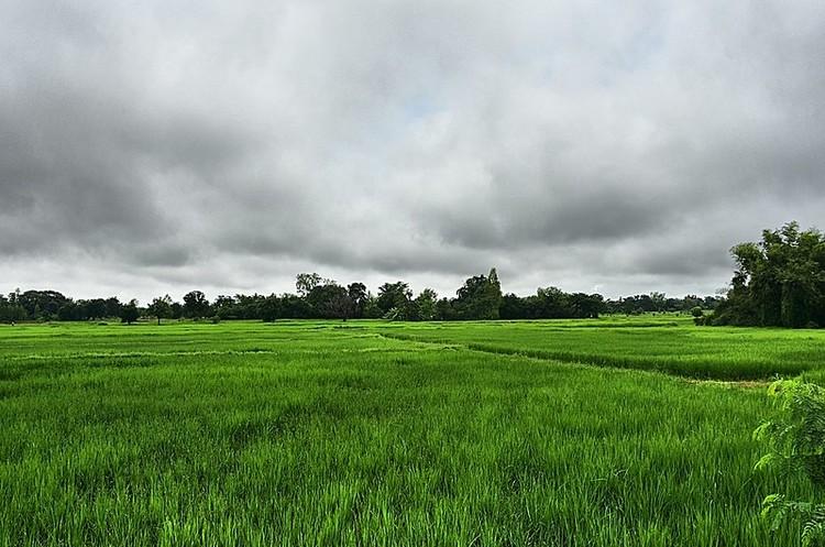 Саудівська SALIC купила акції індійського виробника рису