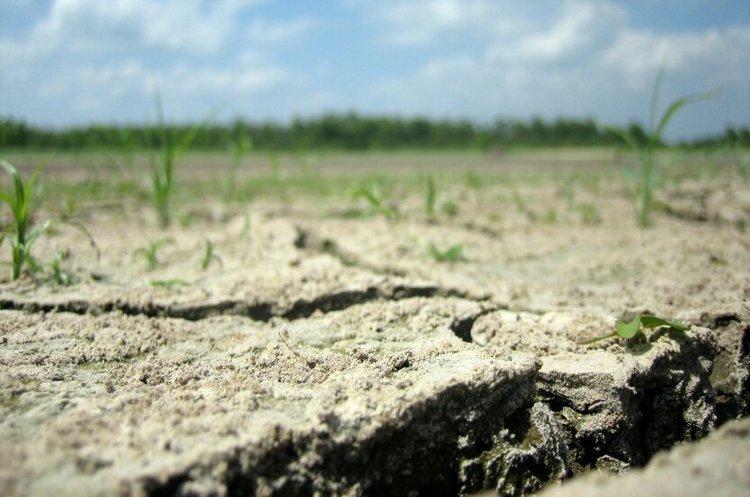 Посуха у Бессарабії підштовхує уряд до удосконалення системи агрострахування