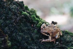 Tante Snails на Львівщині готується до першого врожаю жаб
