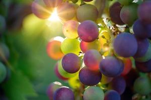 Український столовий виноград поступив у продаж