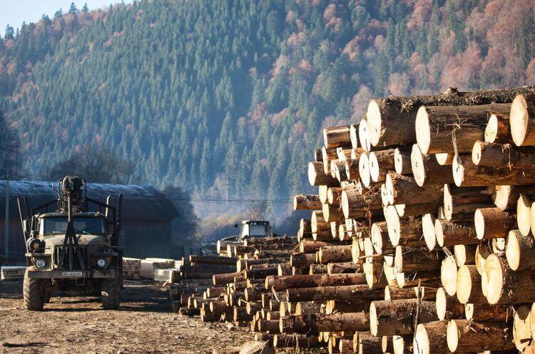 Фірсов: у лісгоспах вирубували в 3-4 рази більше деревини, ніж за документами