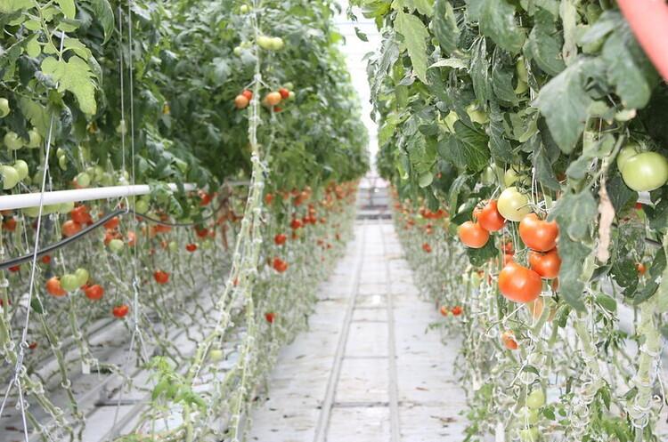 На одному з дахів у Парижі розташували найбільшу висотну ферму в Європі