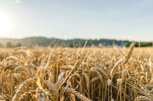 Мінекономіки та учасники зернового ринку підписали Меморандум про взаєморозуміння