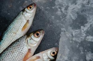 Україна експортувала готової та консервованої риби на понад $2,4 млн