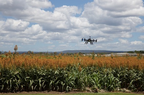 Цифрове поле: навіщо потрібна автоматизація в агробізнесі