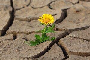 Сухой остаток: почему засуха в Бессарабии уничтожает не только урожай
