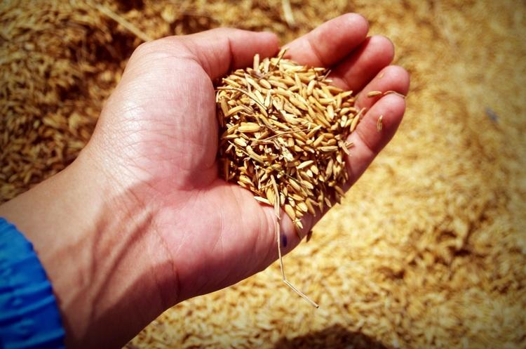 ДПЗКУ закупила майже на 329 мільйонів зерна за форвардною програмою