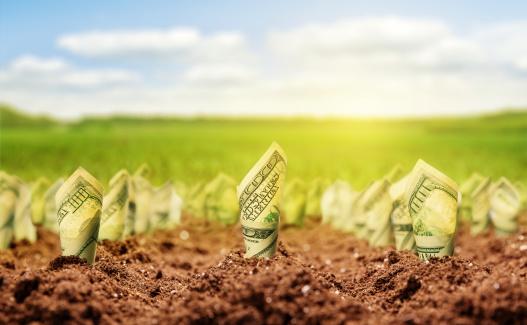 Укрдержфонд оголосив конкурс із надання кредитів фермерським господарствам