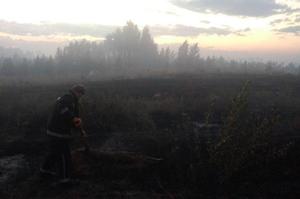 На Луганщині другу добу гасять лісову пожежу, спричинену обстрілом