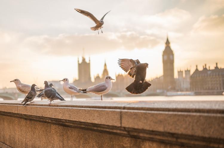 Лондон залишається провідним місцем для інвесторів, навіть попри наслідки пандемії