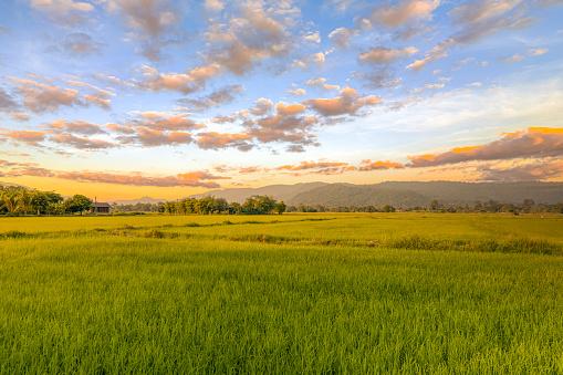 Нацакадемія аграрних наук не внесла відомості про користування 145 000 га землі