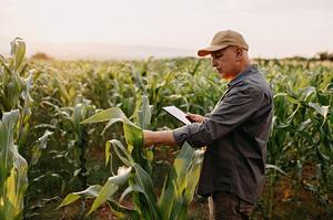 Уряд спрямував аграріям 125 млн грн часткової компенсації відсотків за кредитами за січень-червень 2020 року