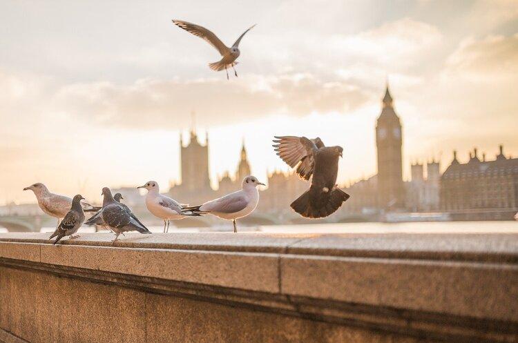 Британія вступає в рецесію після обвалу економіки на 20,4%