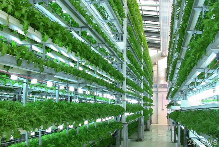 «Байєр» і Temasek створили нову компанію з вирощування овочів