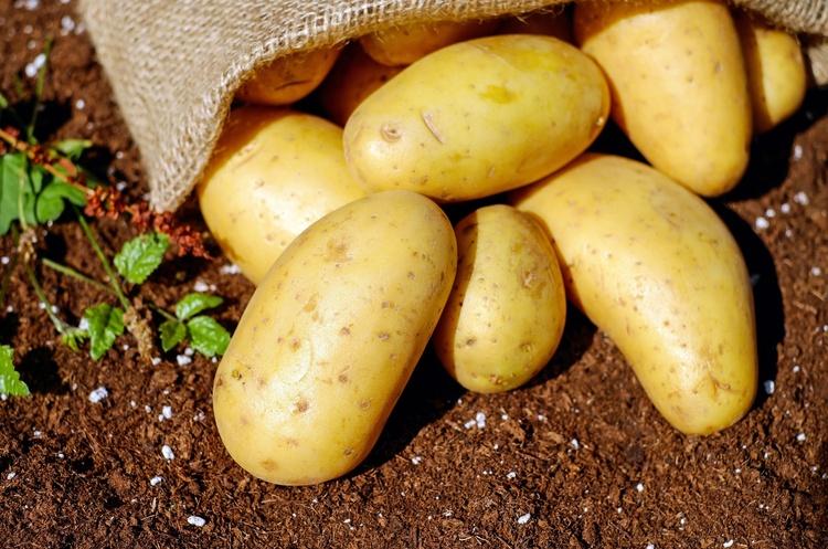 Україна увійшла у ТОП-3 країн-виробників картоплі