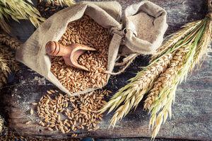 Україна цьогоріч може отримати другий за обсягом врожай після минулорічного – УЗА