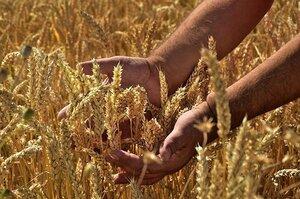 Україна вже експортувала понад 9 млн т зерна з нового врожаю