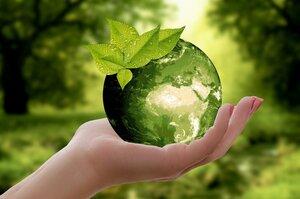 Природа большого бизнеса: как успешные компании защищают климат и экологию