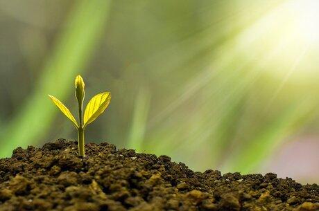 Засівати перспективу: з чого почати і як уникнути помилок в агробізнесі