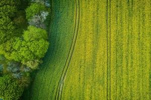 Власникам землі вигідніше здавати її в оренду, а не продавати – голова Держгеокадастру