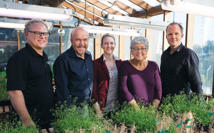 Вчені роблять ставку на біонічний бур'ян для боротьби з кліматичними змінами