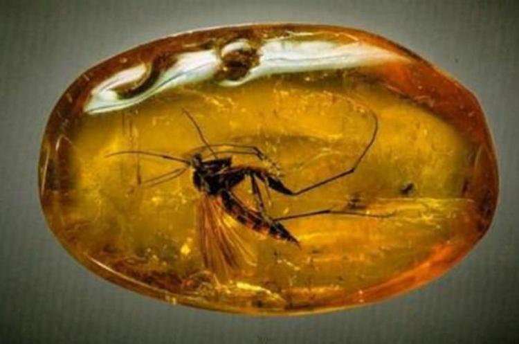Учені вперше відновили ДНК комах, застиглих у смолі
