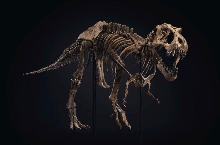 Один з найповніших скелетів тиранозавра продано на аукціоні за рекордні $32 млн