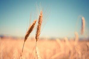 Щоб покласти край голоду у світі до 2030 року необхідно $330 млрд – дослідження