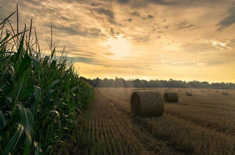 Україна годує 150 млн населення у світі та може подвоїти ці обсяги  – Мінекономіки