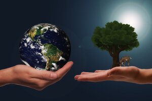 Бизнесы с «зелеными» сердцами: 4 корпорации, движимые экомиссиями