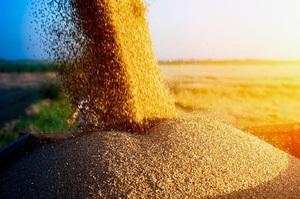 Транснаціональні корпорації чинять тиск на українських аграріїв – Богданець
